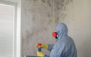 Самостоятельная обработка кирпичных стен от грибка